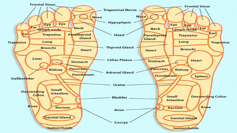 Acupressure Points Foot Chart