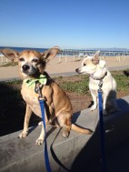 The boys looking dapper after their morning walk on October 30.