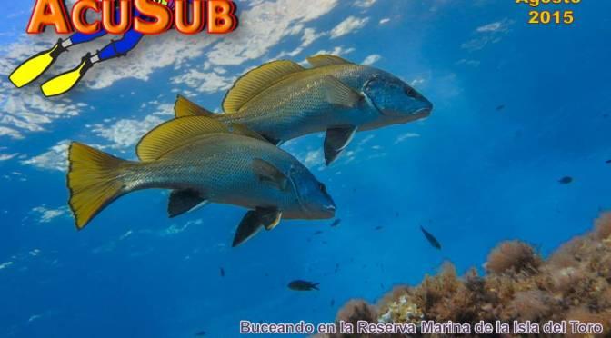 ACUSUB Revista de Buceo nº 151