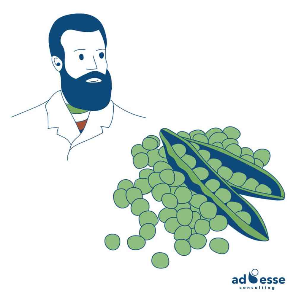 Pareto principle pea story by Ad Esse Consulting
