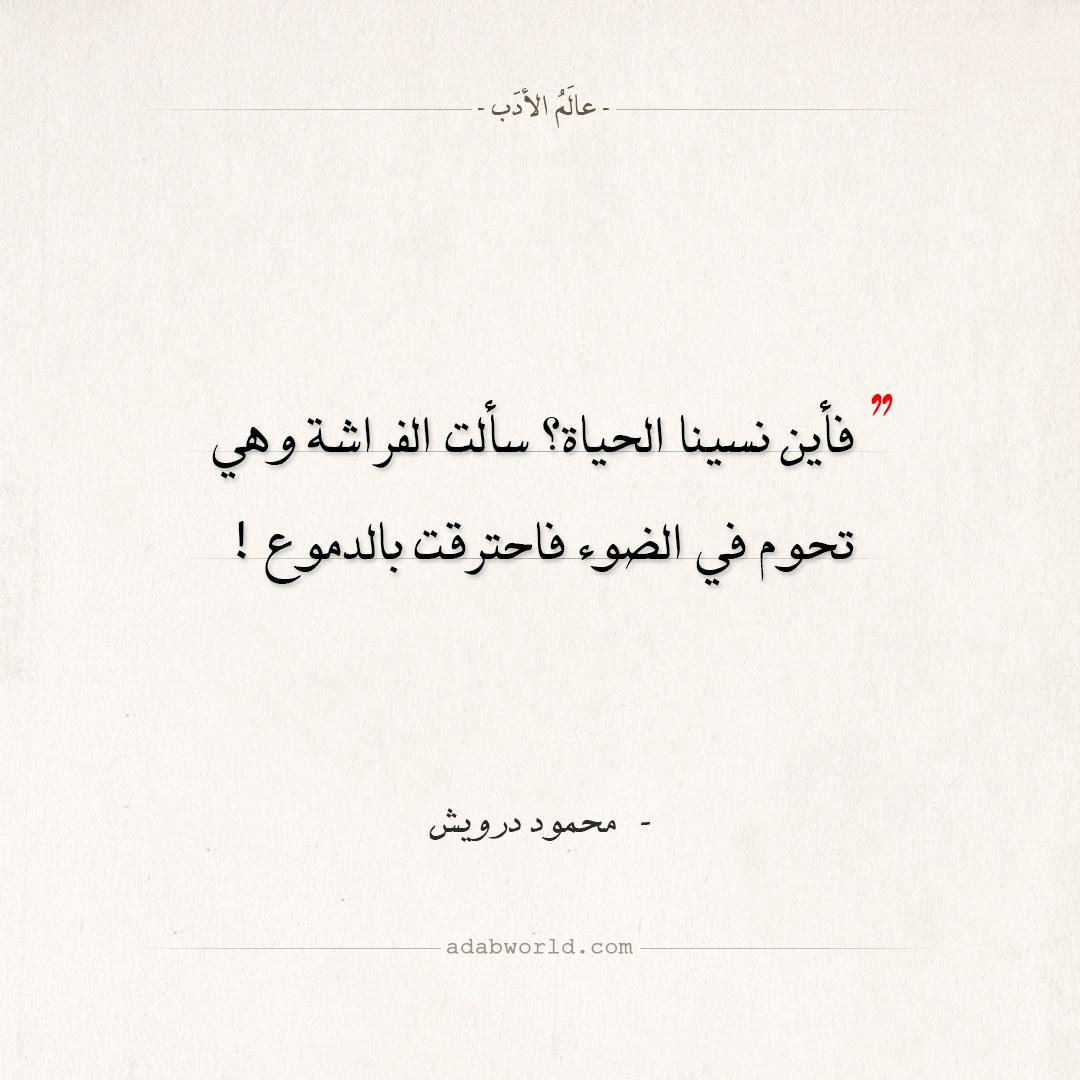 اقتباسات محمود درويش - سألت الفراشة