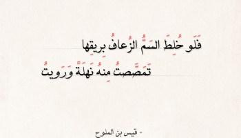 شعر قيس بن الملوح - ألا يا نسيم الريح حكمك جائر