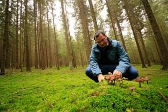 Pilzliebhaber: Der Mykologe Josef Simmel betrachtet eine Gruppe von Knopfstieligen Rüblingen - eine ungiftige Pilzart, die nicht auf den Teller gehört.