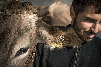 Schönheitsfarmer: Adrian, ältester Sohn des Bauern Jakob Fuster, bereitet die Kuh Blüemli für die legendäre Misswahl in Appenzell vor.