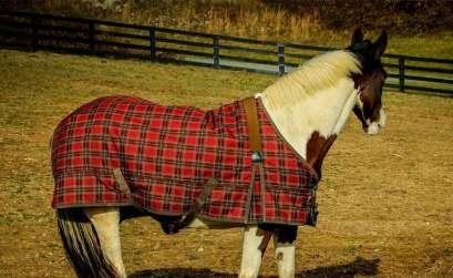 cheval cloture