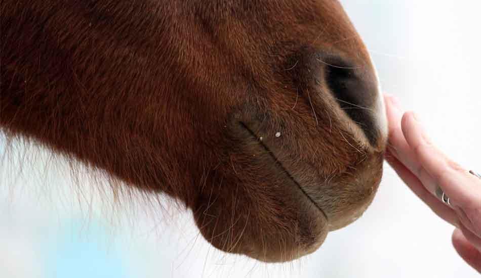 cheval main ressenti