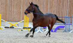longe-cheval-exercice