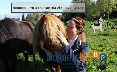 image poney blogueur pro