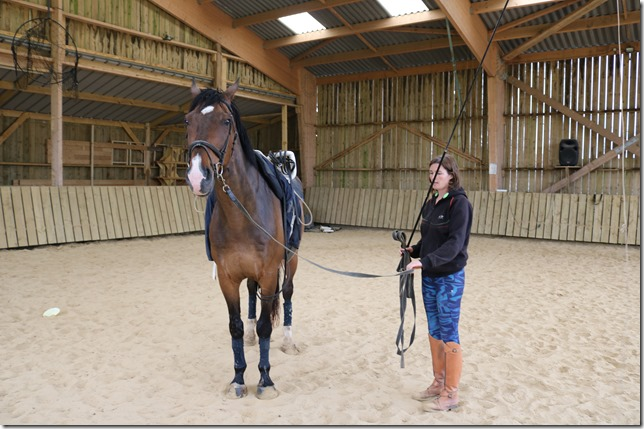position cercle cheval