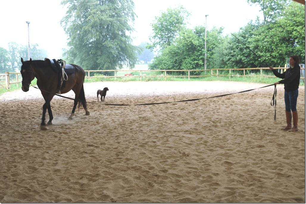cercle longe cheval