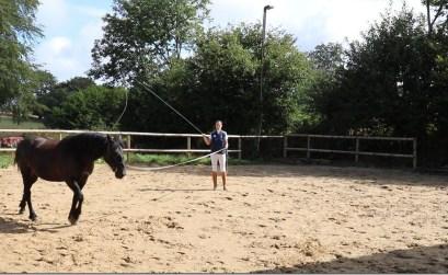travail cheval longe