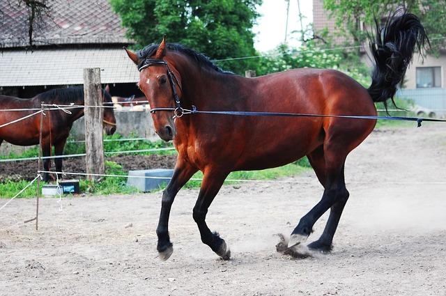 détendre un cheval nerveux à la longe A dada mon dadou