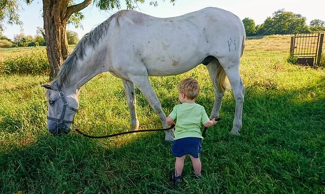 respect dans la relation cavalier cheval
