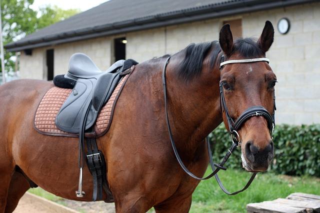 7 idées d'exercice pour muscler son cheval facilement