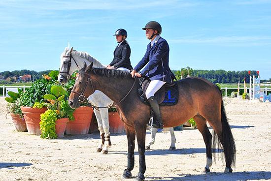 chevaux à l'arrêt immobiles en concours