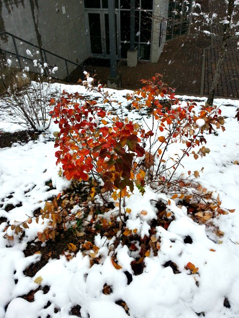 Autumn Color in the Snow, Asheville, NC. Blueridge Parkway Visitors Center. November 2014