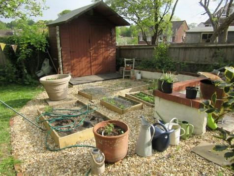 veg plot may1