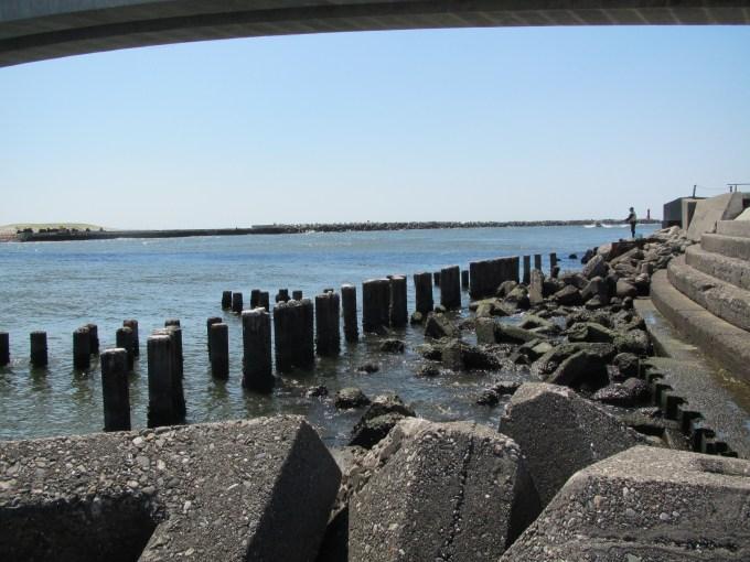 新居 海 釣り 公園 釣果