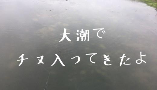 2019年7月頭の浜名湖事情