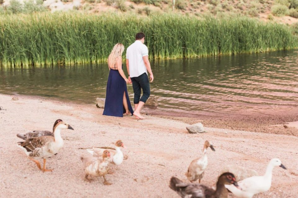 Ducks at Saguaro Lake