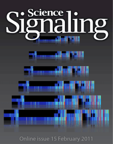 Science Signaling cover, 2011, vol. 4 (no. 160) // Image by Adam Byron // Reproduced with permission from AAAS