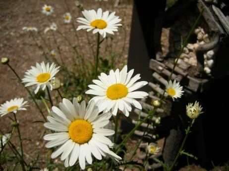 Horseshoe Falls - Wildflowers
