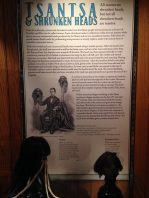 Tsantsa & Shrunken Heads display in The Mütter Museum