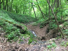 Wyalusing State Park - Tons of small runoff channels feeding the falls