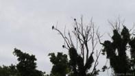 High Cliff State Park - Turkey Vultures