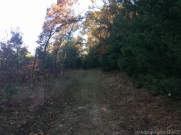 Mill Bluff State Park - Camels Bluff Trail