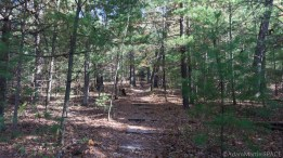 Mill Bluff State Park - Start of stepway to top of bluff