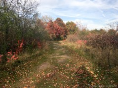 Willow River State Park - Trail to Willow Falls