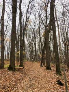 Timms Hill - Trail heading towards peak