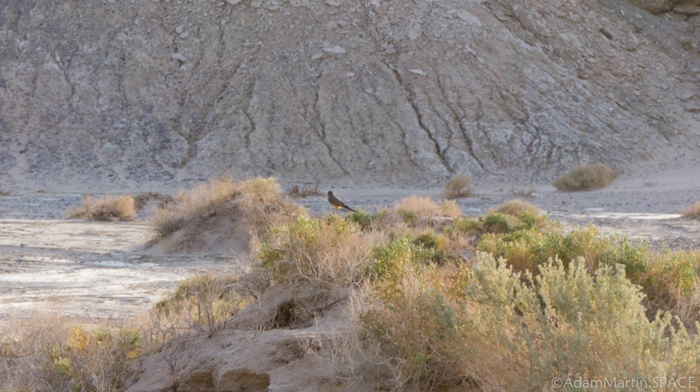 Death Valley - Salt Creek