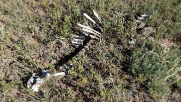 New Mexico Elk Hunt – Carcass bone remnants