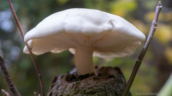 Fonferek's Glen - Mushroom growing on stump