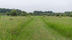 Kohler-Andrae State Park - Meadow hiking path at Ancient Shores trail