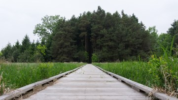 Kohler-Andrae State Park - Boardwalk into the pines at Ancient Shores trail