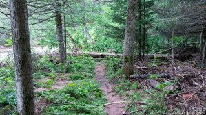 Mays Ledges - Trails near river are much more primitive