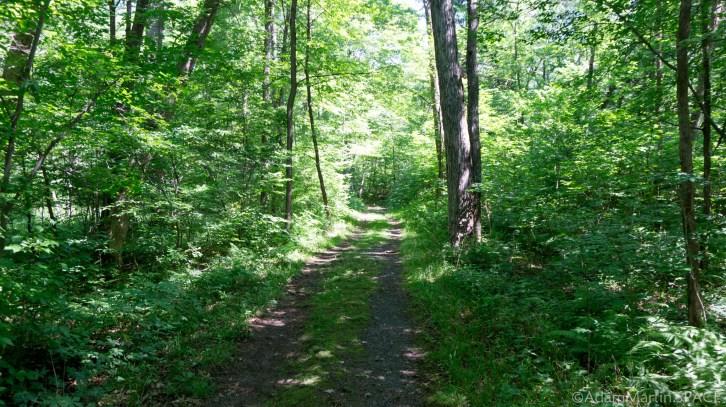 Interstate State Park - Silverbrook Trail