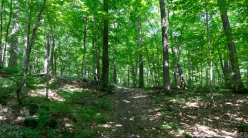 Straight Lake State Park - Trail leading through dense green forest