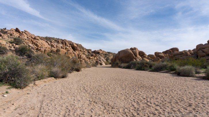 Joshua Tree - Trail To Mastodon Peak