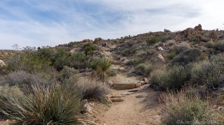 Joshua Tree - Trail To Mastodon Peak
