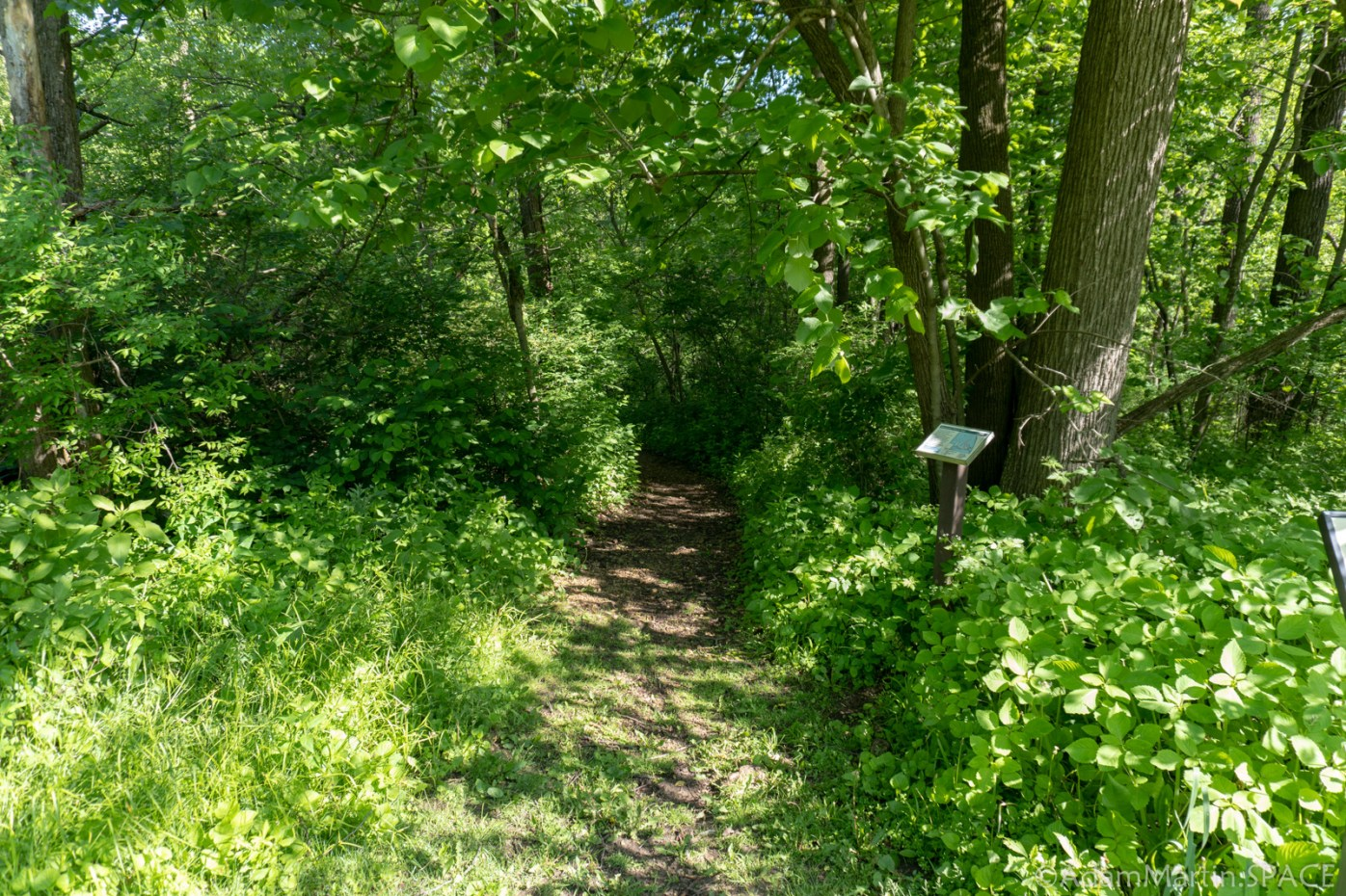 New Glarus Woods State Park - Basswood Nature Trail