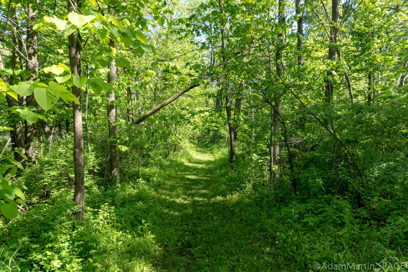 New Glarus Woods State Park - Havenridge Nature Trail