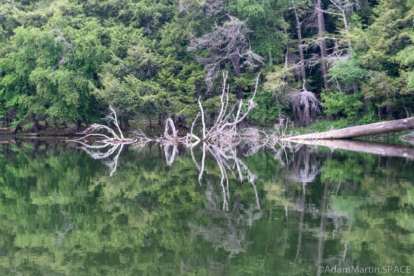 Lost Lake Recreation Area - Downed tree reflection