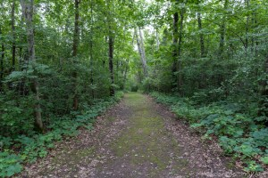 Kinnikinnic State Park - Wooded areas on Green Trail