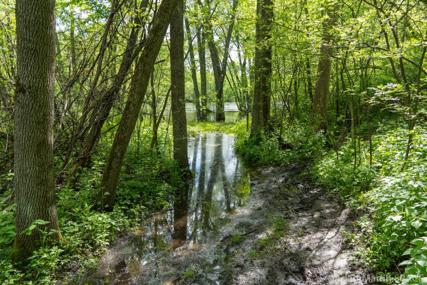 Copper Culture State Park - Trail flooded near Oconto River