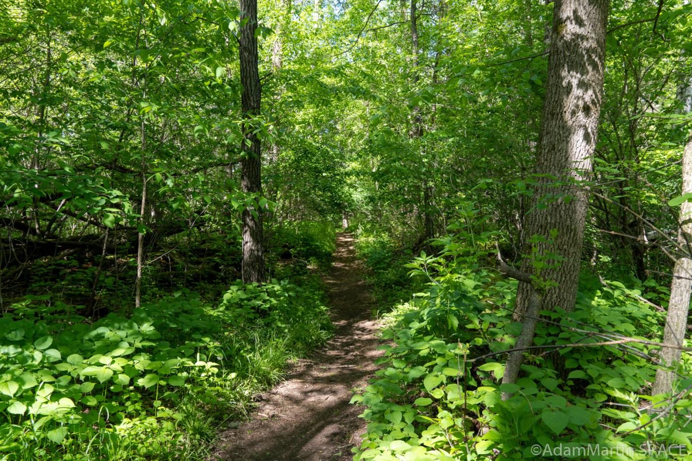 Copper Culture State Park - Woodland Path / River Trail Loop