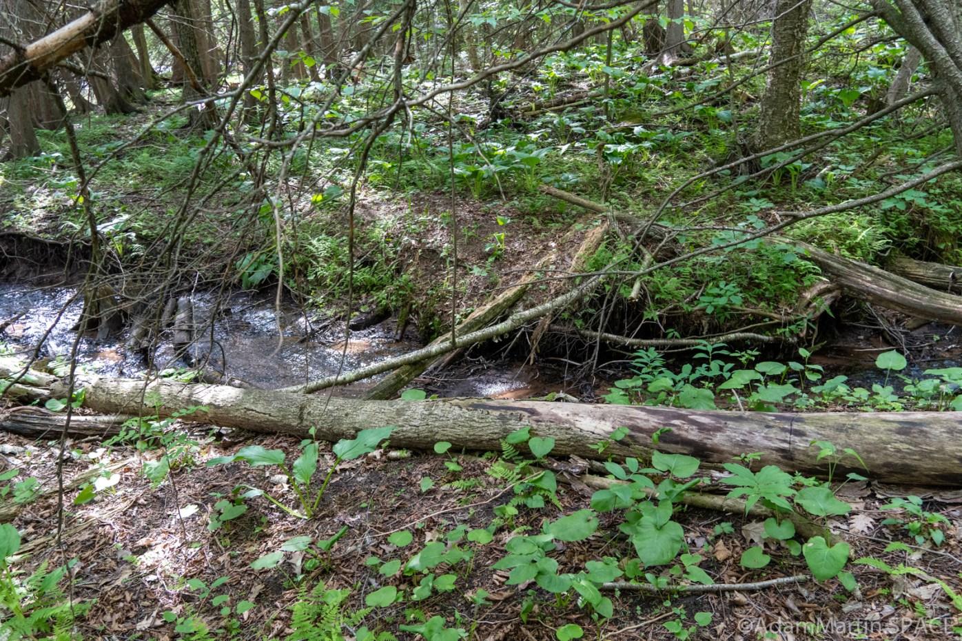 Little Bull Falls (Shawano) - Small runoff crossing